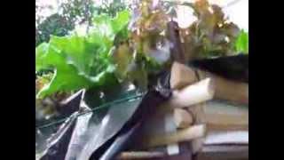 แปลงปลูกผักไฮโดรโปนิกส์
