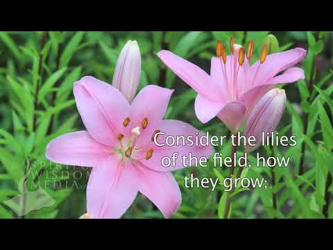Matthew 6:28 - And why take ye thought for raiment? Consider the lilies of the field - Bible Verses