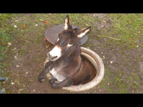 Funny cat videos - Donkey - A FUNNY DONKEY VIDEOS Compilation  Pets And Animals