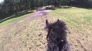 Video Joséphine et Simba cross Poney Elite Lamotte 2014 MP3, 3GP, MP4, WEBM, AVI, FLV Mei 2017