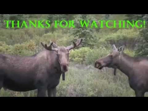 briczar22 - SEARCHING FOR WILDLIFE...: Safari Alaska 4. The excitement of filming wildlife is that you just never know what you are going to get on video. Sometimes it's...