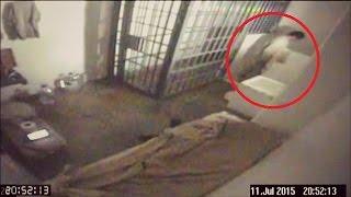 Video 5 Real Prison/Jail Escapes Caught On Camera MP3, 3GP, MP4, WEBM, AVI, FLV Oktober 2018