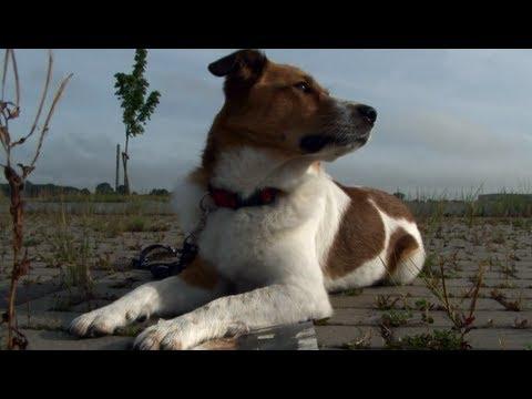 Hund entlaufen? Werbespot für die widTag Hundemarke!
