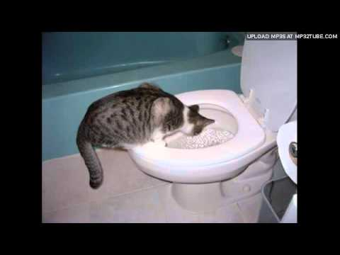 Stuart McLean – Toilet Training The Cat Part 1