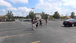 Training dogs to heel in public. Suburban K9 Dog Training