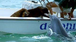 Dolphin Kisses Dog. Too Cute <3