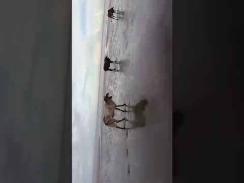Erosão na Praia do Goiabal em Calçoene -Ap