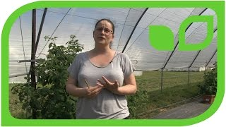 Interview mit Feli Fernandez: How to breed the perfect raspberry (englisch)