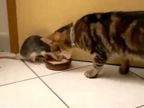 The real life TOM AND JERRY!