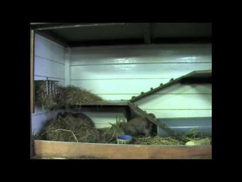 Het houden van konijnen: alleen of met meerderen + benodigdheden!