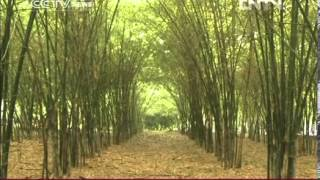 VIDEO  PANDA PAIR'S NEW HOME IN SINGAPORE