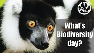 International day for Biological diversity, World Biodiversity day, IBD 2017 it all means the same thing and it is happening today ...