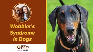 Wobbler's Syndrome in Dogs