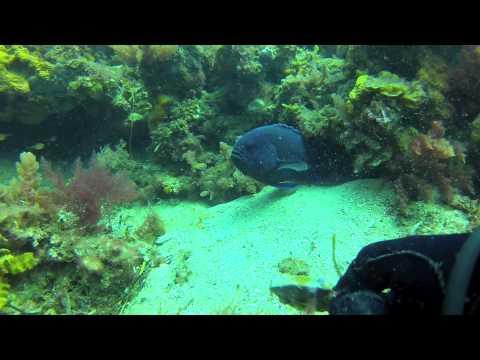 SeaCliff Reef - SA