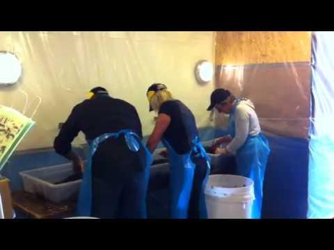 Skördefest - Avskälkning, krossning, handrensning och upp i cisternerna