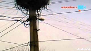 VIDEO DNE: Kachna si myslí, že je čáp