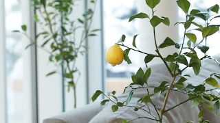 How To Regrow Fruit From Your Kitchen by Tasty