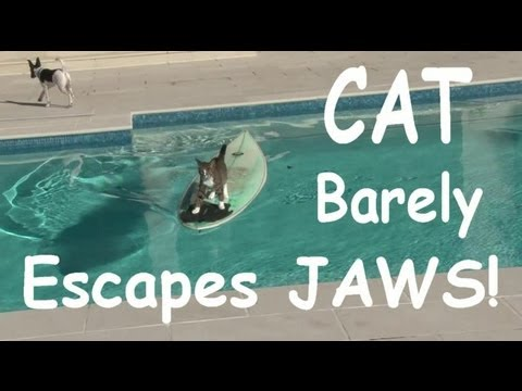 Cat Surfs Across Pool To Escape Dog's Pursuit…LOL!