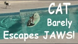 Cat Surfs Across Pool To Escape Dog
