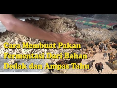 Video Membuat Fermentasi Pakan Ayam Bernutrisi dari Bahan Dedak dan Ampas Tahu download in MP3, 3GP, MP4, WEBM, AVI, FLV January 2017