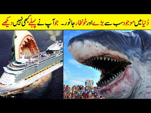 Top 10 Biggest Animals in the World || World's Largest Animals
