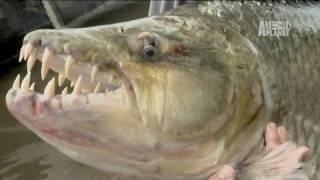 River Monsters: 80 lb. Piranha