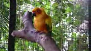 Botolan Philippines  city photo : Botolan Wildlife Farm Philippines - Sun_Conure_Video