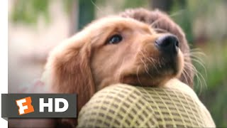 Nonton A Dog S Purpose  2017    I Had A Boy Scene  1 10    Movieclips Film Subtitle Indonesia Streaming Movie Download