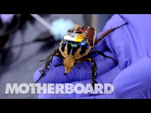 The Cyborg Beetles Designed to Save Human Live
