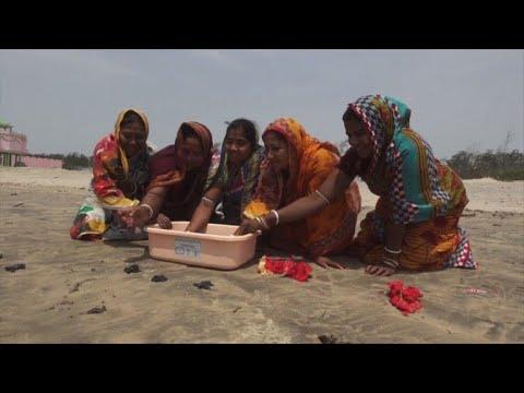 العرب اليوم - شاهد: سكان ولاية أوديشا يُحاولون حماية السلاحف الزيتونية الصغيرة