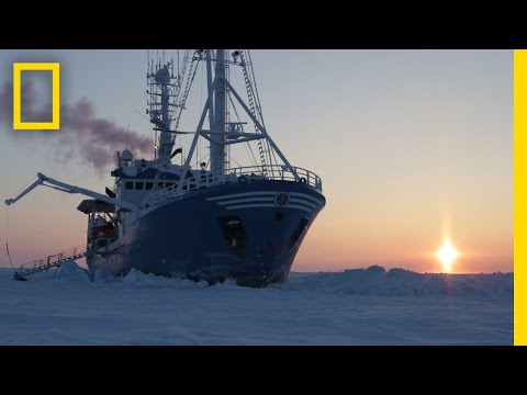 Exploring the Arctic Drifting With the Ice Life on an Arctic