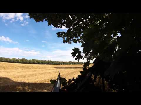 Video: Shooting pigeon over decoys
