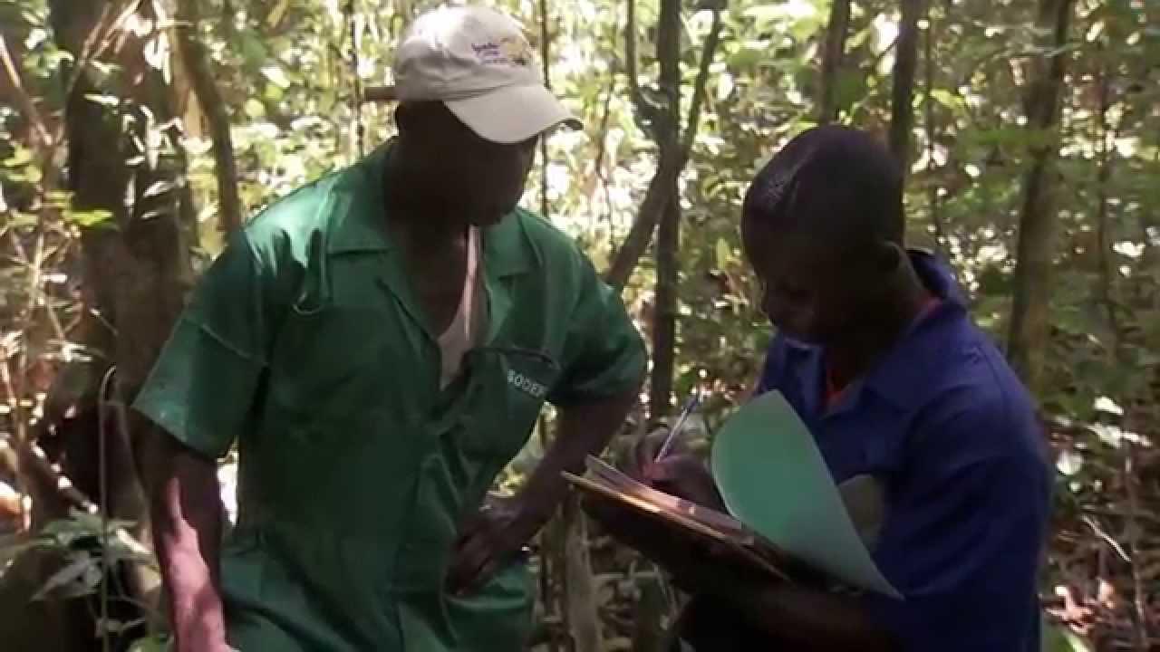 Gestion durable des forêts en République démocratique du Congo (version courte) AFD