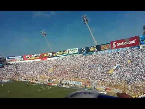 Dale, dale alboooo. - La Ultra Blanca y Barra Brava 96 - Alianza - El Salvador - América Central