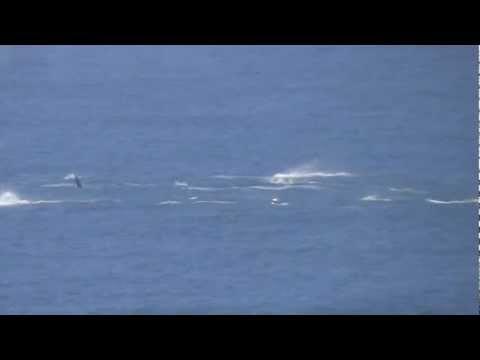Golfinhos, próximos à Angra dos Reis/RJ - filmagem a bordo do Cruzeiro MSC Fantasia.
