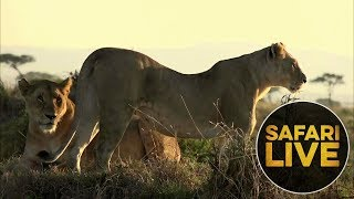 safariLIVE: The Gauntlet - Episode 3 - August 11, 2018