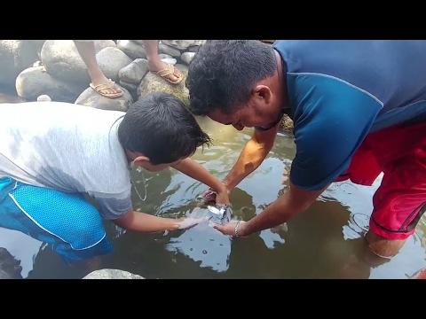Los peces estan muriendo, que injusticia! Un nudo en la garganta. Emergencia Ambiental. Parte 4