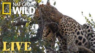 WATCH NOW: Safari Live   Nat Geo WILD by Nat Geo WILD