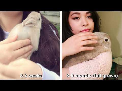 Full Grown vs Baby Bunny - Netherland Dwarf Rabbit - Size Compare