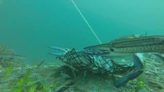 Wallaroo Australia  City new picture : Gopro Crabbing - Wallaroo South Australia - April 2015