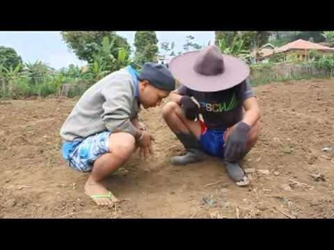 Bodoran Kang Ibing: Tikotok.flv