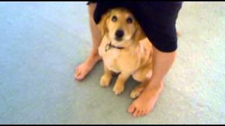 Smart Puppy 14 Weeks Old