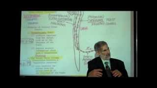 THE SPINAL CORD&SPINAL TRACTS; PART 2 By Professor Fink