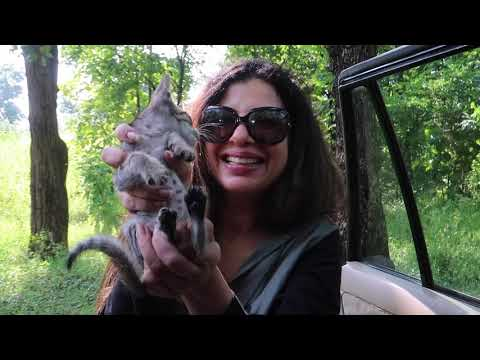 Staying in MIDDLE of the JUNGLE   Ep 1   PENCH Tiger Reserve   Ss Vlogs :-)