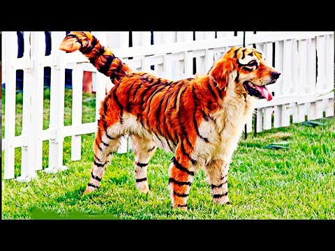 RAREST CROSS-BREED ANIMALS