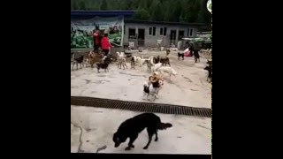 Guangyuan China  city pictures gallery : Bo Ai Animal Protection Centre Of Guangyuan, China