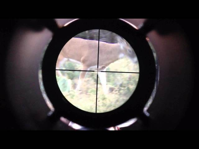 Texas 10 Point Kill with iScope