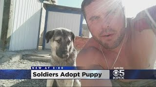 Soldiers adopted a puppy, Ollie, in Iraq and have brought him home to the U.S. John Ramos reports. (5/19/16)