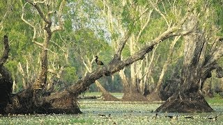 Kakadu Australia  City new picture : Tour Australia: Kakadu National Park