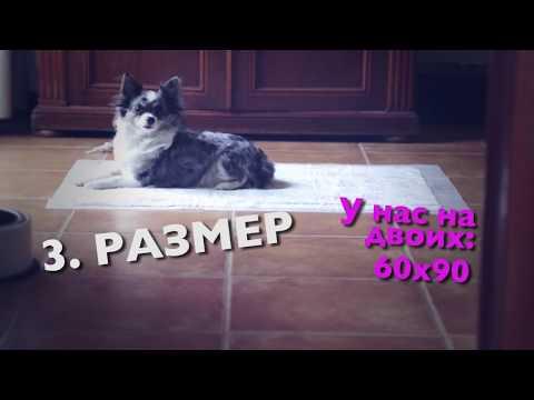 Как приучить щенка и собаку к туалету на пеленке | Чихуахуа Софи